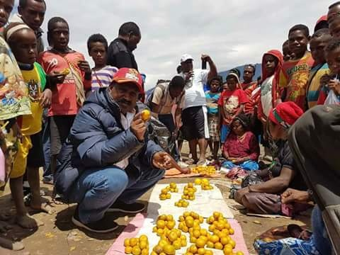 Bupati Puncak Willem Wandik,SE,M,Si, saat mengunjungi masyarakat penjual jeruk manis di pasar Ilaga, potensi pertanian di Kabupaten Puncak, cukup besar karena tanahny subur, Bupti mengajak masyarakat gemar menanam.
